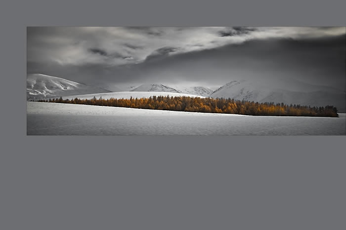 Mackenzie Winter Colour